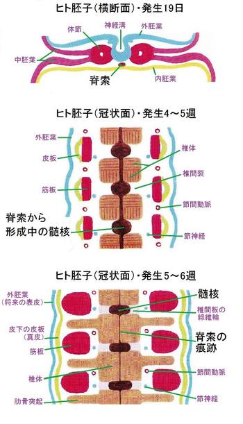 Sekisaku001_2