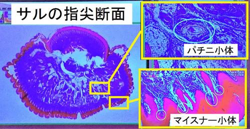 Shindou1